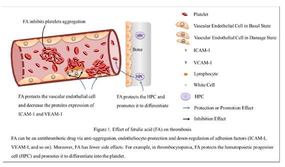 Ferulic Acid, A Potential Antithrombotic Drug | Journal of